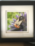 Bee on Globe Thistle Picture £15