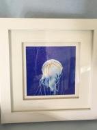 Berlin Zoo Jellyfish £15.