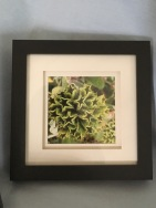 Green Plant £15